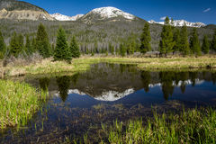 Reflexion i Rocky Mountain National Park Royaltyfri Fotografi