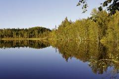 Reflexion i skogsjön Royaltyfria Bilder