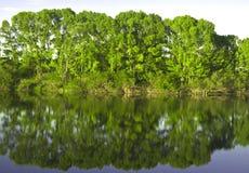 Reflexion im Fluss Stockbilder