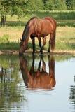 Reflexion im Teich Stockfotos