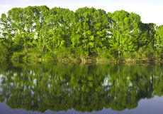 Reflexion In The River Stock Images