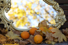 Reflexion in a mirror of autumn leaves, an autumn mirror and tan. Reflexion in a mirror of autumn leaves on branches of a maple and tangerines Stock Image