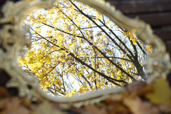 Reflexion in a mirror of autumn leaves on maple branches. Reflexion in a mirror of autumn leaves, an autumn mirror Royalty Free Stock Photo