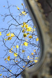 Reflexion in a mirror of autumn leaves on maple branches Stock Images