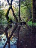 Reflexion na wodzie Obraz Stock
