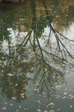 Reflexion på floden Arkivfoto