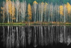 Reflexion Pittoresk reflexion av träd i floden Royaltyfri Bild