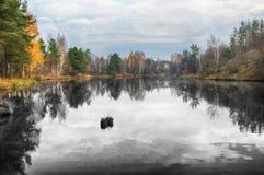 Reflexion Pittoresk reflexion av träd i floden Arkivbild