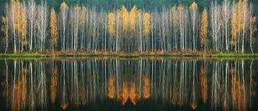 Reflexion Pittoresk reflexion av träd i floden Fotografering för Bildbyråer