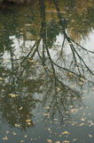 Reflexion on river Stock Photo