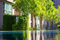 Reflexion of small trees in a clear water of pool stock image