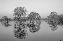 Reflexion träden på det svartvita vattnet Arkivbild