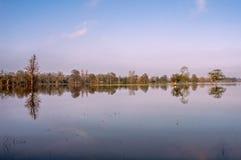 Reflexion träden på vattnet i solsken arkivfoton