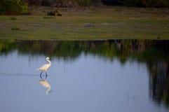 Reflexion und ein intelligenter Weg stockfoto