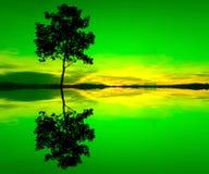 Reflexion und Schattenbild eines einzelnen Baums Lizenzfreies Stockbild