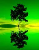 Reflexion und Schattenbild eines einzelnen Baums Stockfotografie