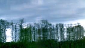 Reflexion von Bäumen 1 stock video