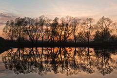 Reflexion von Bäumen Stockfotografie