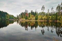 Reflexion von Bäumen stockfotos