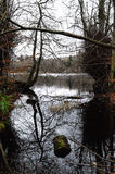 Reflexion von Bäumen am Bolam See Stockbild