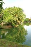 Reflexion von Bäumen in einem See in einem allgemeinen Park in Bangkok, Thailand Lizenzfreies Stockfoto