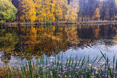 Reflexion von Bäumen in einem Teich Stockfoto