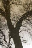 Reflexion von Bäumen in einer Regenpfütze Lizenzfreie Stockfotos