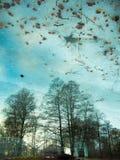 Reflexion von Bäumen im Wasser Stockfotos