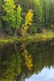 Reflexion von Bäumen im Wasser des Flusses Mologa Lizenzfreie Stockbilder