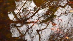 Reflexion von Bäumen im Teich stock footage