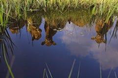 Reflexion von drei holländischen Kühen Lizenzfreie Stockbilder