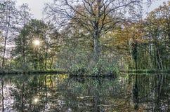 Reflexion von einer Insel mit einen Bäumen Lizenzfreies Stockbild