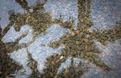 Reflexion von Kokosnussbäumen im Wasser Lizenzfreie Stockfotos