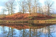 Reflexion von Winterbäumen Lizenzfreie Stockfotos