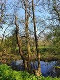Reflexion on water. Reflexion water trees farn sky royalty free stock photo