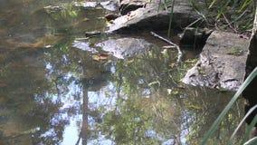 Reflexion in West-Ithaca-Nebenfluss, Brisbane Australien stock video footage
