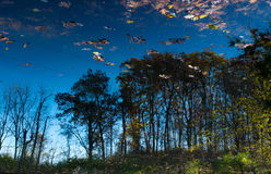 Reflexionen Lizenzfreie Stockfotografie