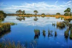Reflexionen auf einem ruhigen Sumpfsee Stockfotografie