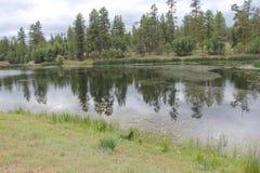 Reflexionen auf einem Teich lizenzfreie stockbilder