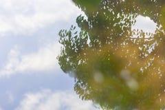 Reflexionen av clound och himmel med trädet Fotografering för Bildbyråer