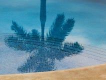 Reflexion av palmträdet i simbassäng Arkivfoto