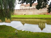 Reflexionen av fästningen i vattnet av försvardiket och en familj av svanar royaltyfri foto