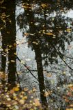 Reflexionen av naturen i höst royaltyfri bild