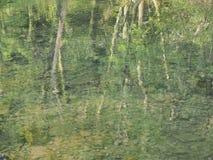 Reflexionen av träd gillar Monet målning Royaltyfria Bilder