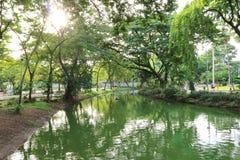 Reflexionen av träd i en sjö i ett offentligt parkerar i Bangkok, Thailand Arkivfoton