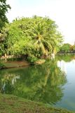 Reflexionen av träd i en sjö i ett offentligt parkerar i Bangkok, Thailand Royaltyfri Foto