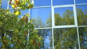 Reflexionen av träd i fönstren av ett modernt höghus med en exponeringsglasfasad som står nära, parkerar lager videofilmer