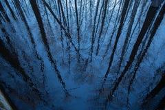 Reflexionen av trees bevattnar in royaltyfri fotografi