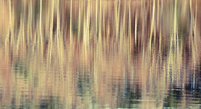 Reflexionen av trees bevattnar in Arkivbild