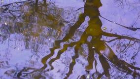 Reflexionen av trees bevattnar in Bakgrundsfors på våren av den statiska kameran arkivfilmer